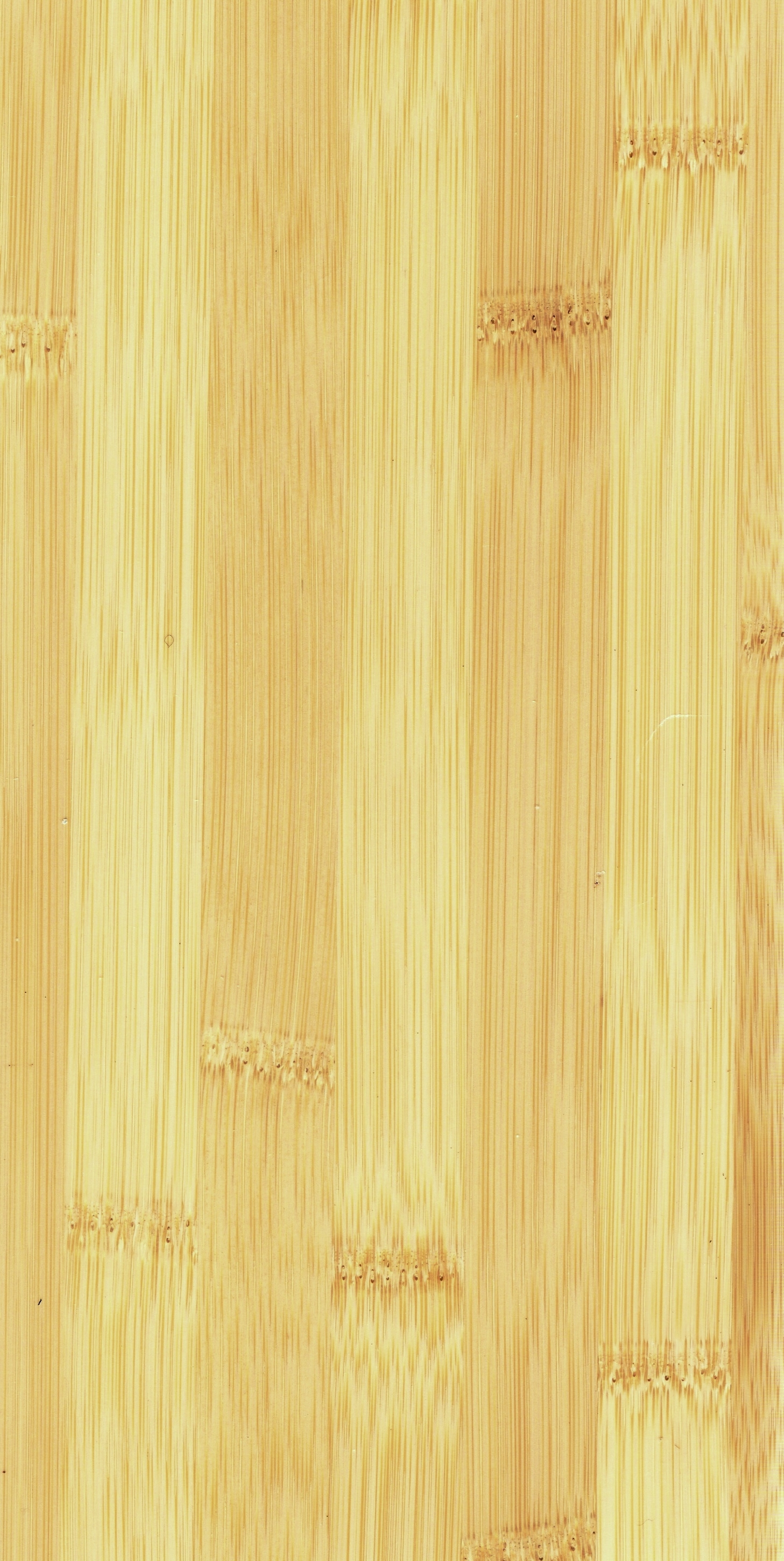 Bamboo Terminology From Cost Of Flooring